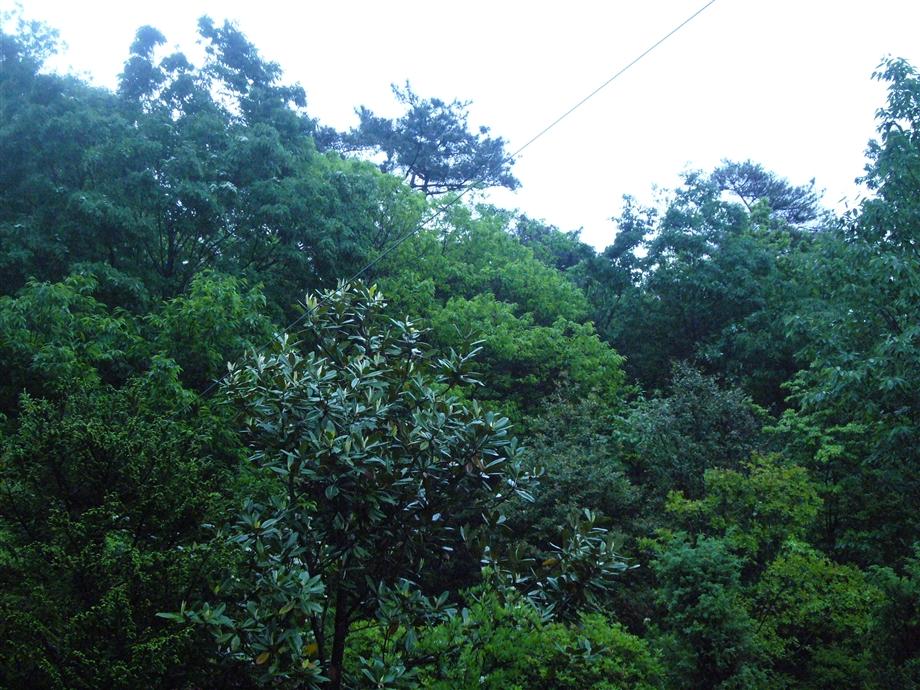 2011528lumix_064_r